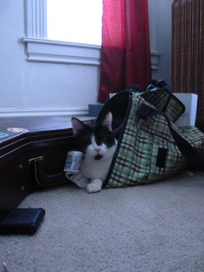 catinthebag