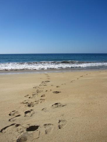 malpasosfootprints
